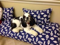 Maggie at The Lake House On Our New Bench Cushion