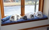 Window Seat Cushion for Cats