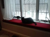Cat and New Window Cushion