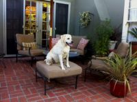 Dog Days of Summer On New Sunbrella Patio Cushions